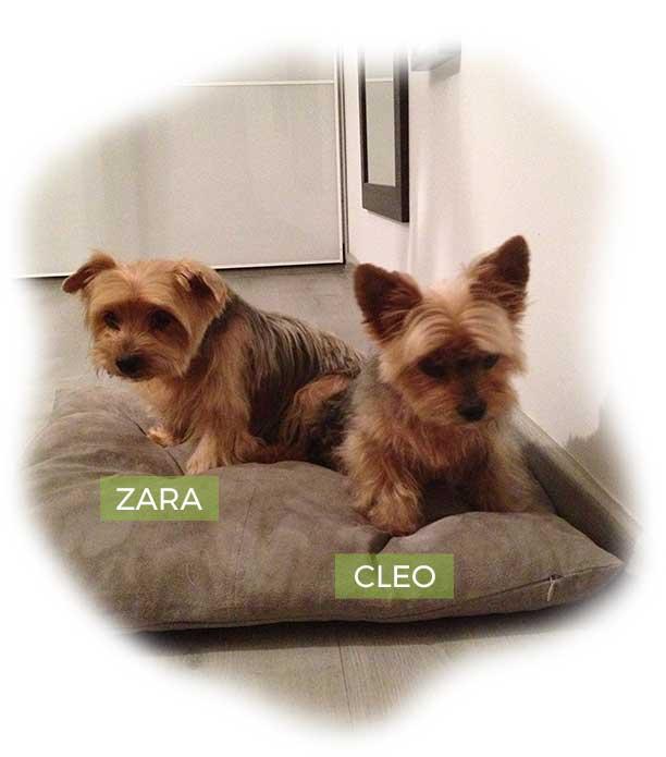 Imagen de mis perritas Zara y Cleo