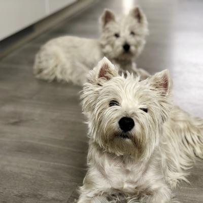 Perros Diva y Sisí