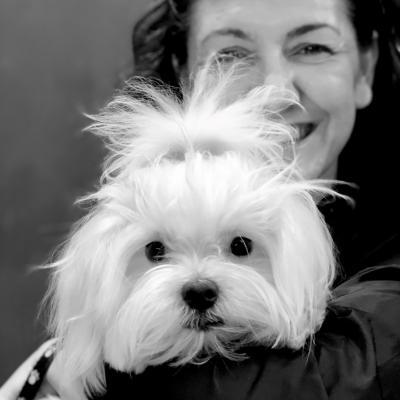Perro con Tiny